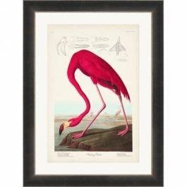 American Flamingo Picture